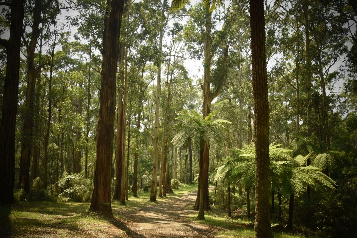 Bushwalking in the Dandenong Ranges National Park is one of the main activity for large groups